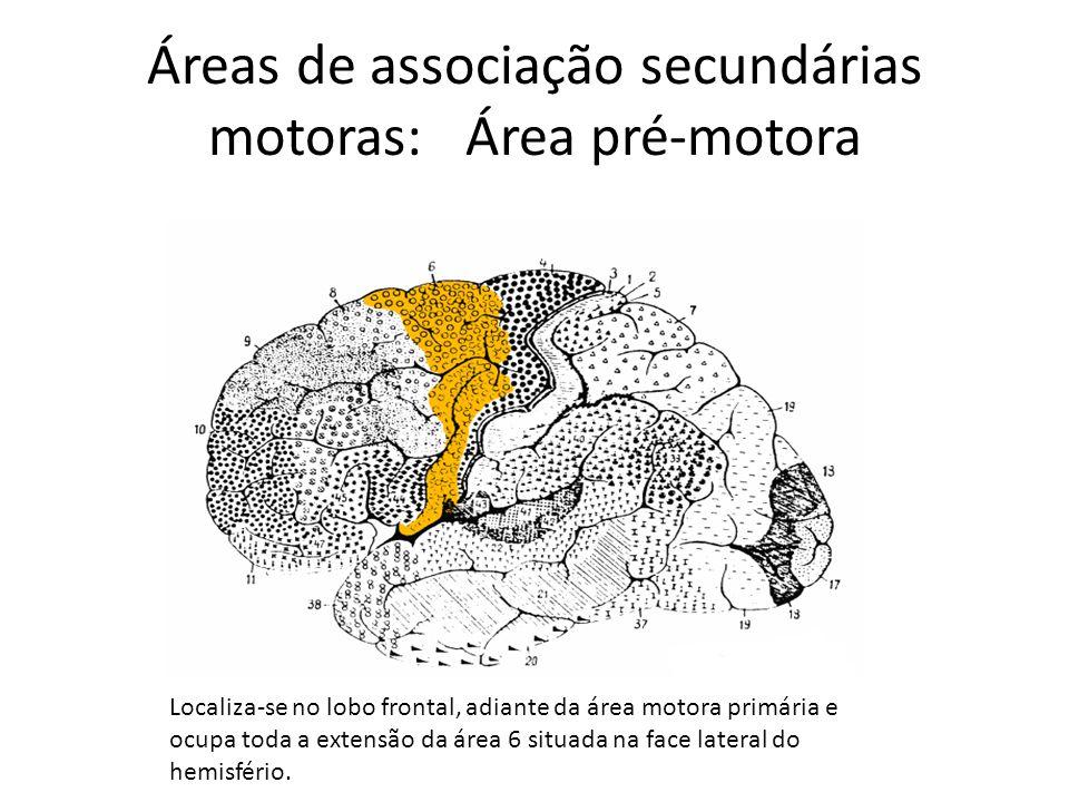 Áreas de associação secundárias motoras: Área pré-motora