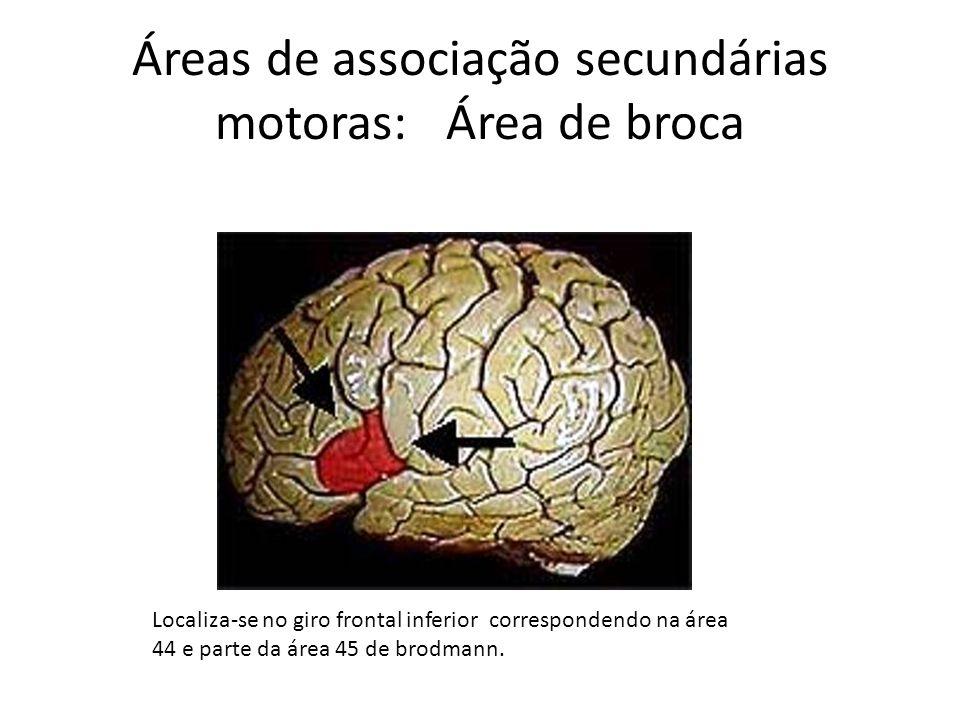 Áreas de associação secundárias motoras: Área de broca