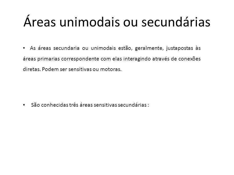 Áreas unimodais ou secundárias