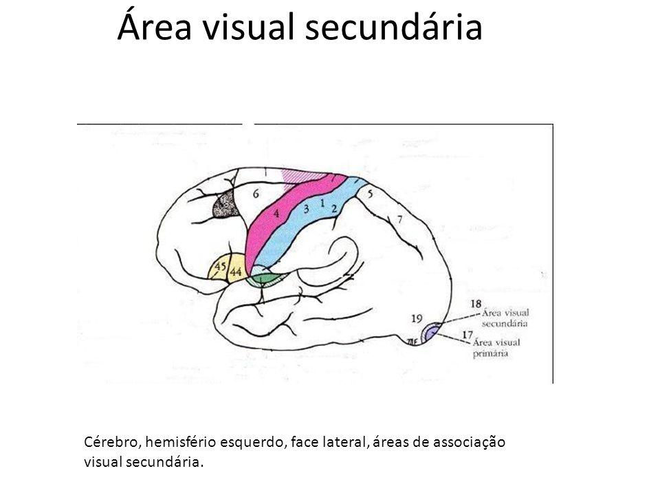 Área visual secundária