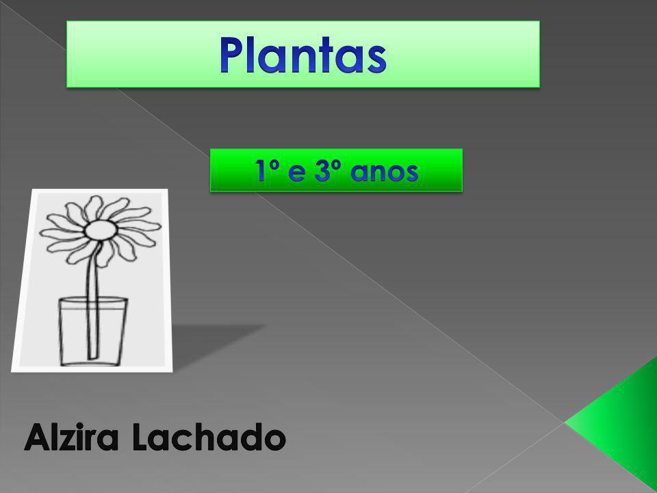 Plantas 1º e 3º anos Alzira Lachado
