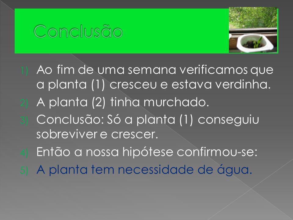 Conclusão Ao fim de uma semana verificamos que a planta (1) cresceu e estava verdinha. A planta (2) tinha murchado.