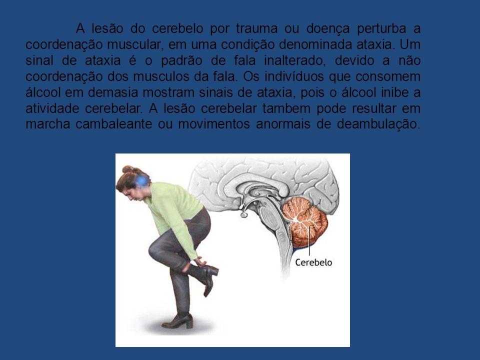 A lesão do cerebelo por trauma ou doença perturba a coordenação muscular, em uma condição denominada ataxia.