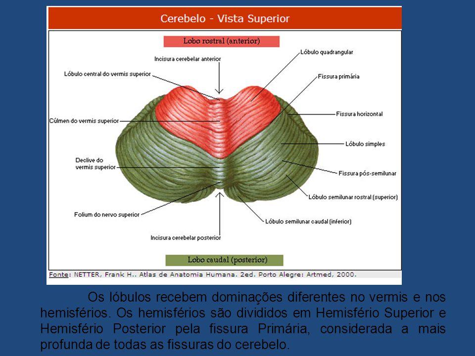 Os lóbulos recebem dominações diferentes no vermis e nos hemisférios