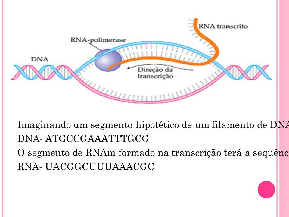 Imaginando um segmento hipotético de um filamento de DNA com a sequência de bases: