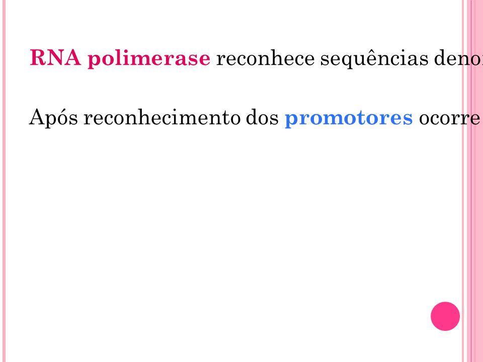 RNA polimerase reconhece sequências denominadas promotores (sequências de nucleotídeos localizadas imediatamente antes de um gene)
