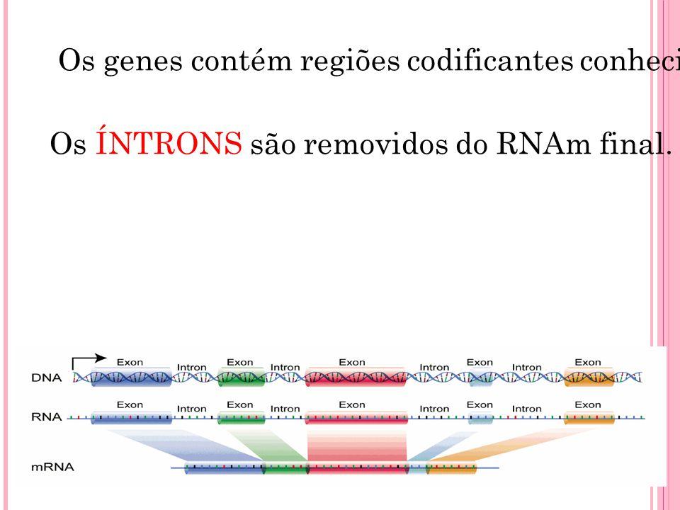 Os genes contém regiões codificantes conhecidas como ÉXONS, que são expressos, com seqüências intercalares conhecidas como ÍNTRONS, que não são expressas.