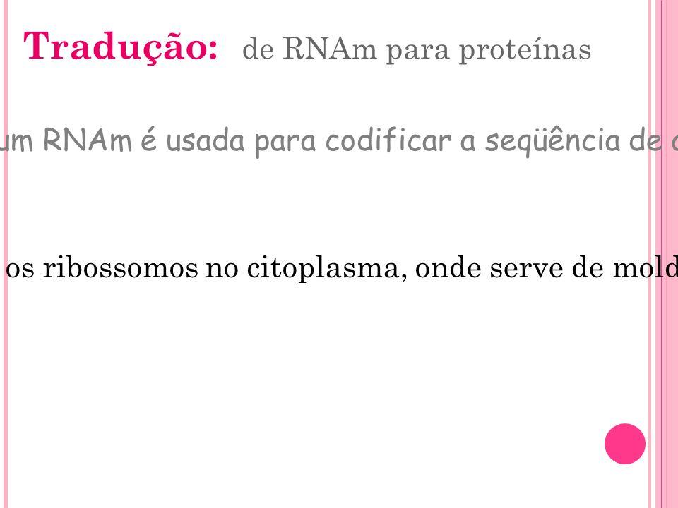 Tradução: de RNAm para proteínas