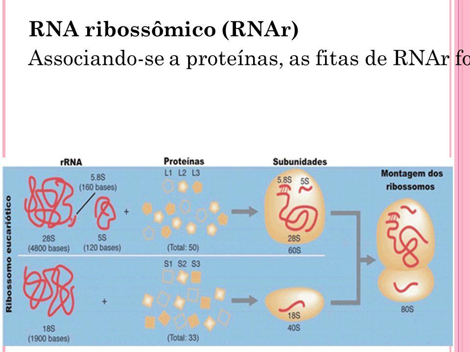 RNA ribossômico (RNAr)