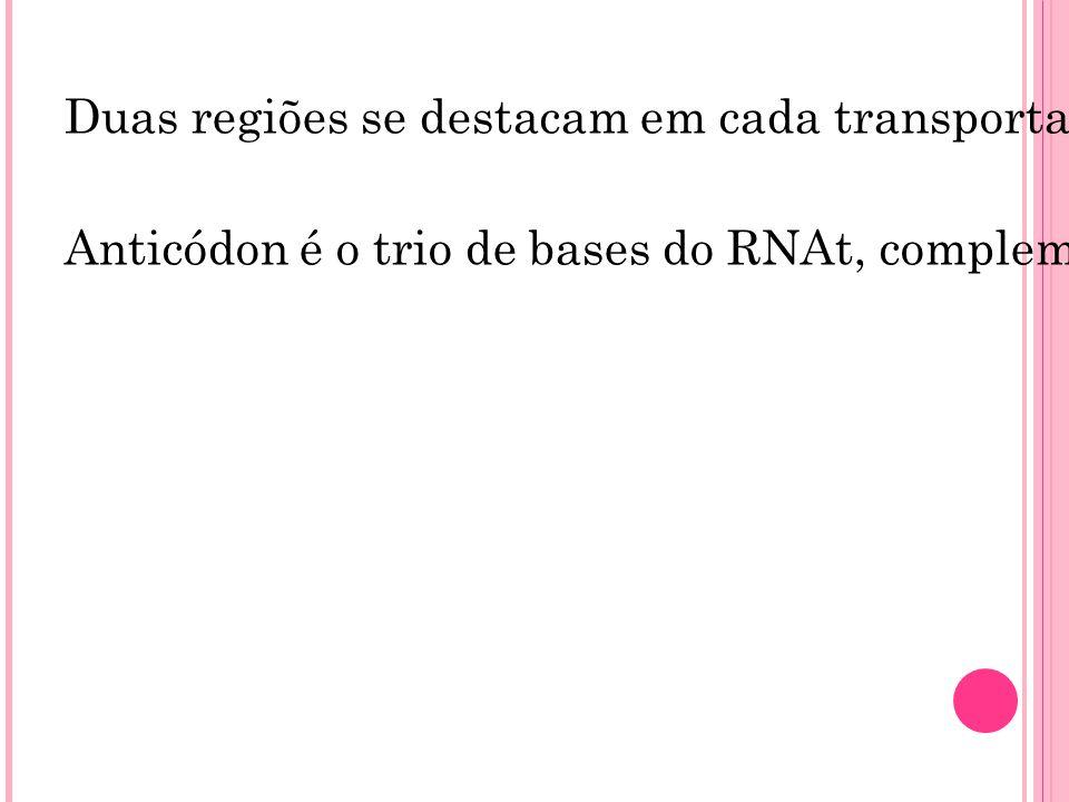 Duas regiões se destacam em cada transportador: uma é o local em que se ligará o aminoácido a ser transportado e a outra corresponde ao trio de bases complementares (chamado anticódon) do RNAt, que se encaixará no códon correspondente do RNAm.