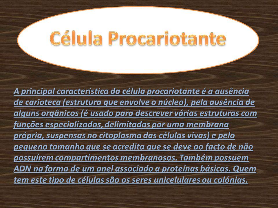 Célula Procariotante
