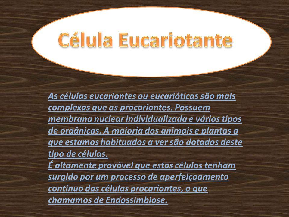 Célula Eucariotante