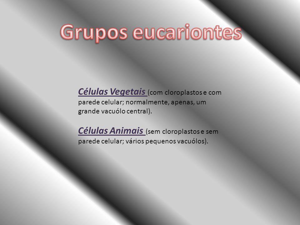 Grupos eucariontes Células Vegetais (com cloroplastos e com parede celular; normalmente, apenas, um grande vacuólo central).