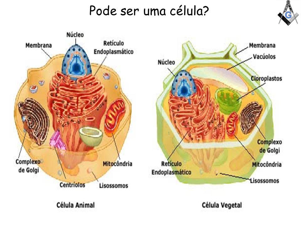 Pode ser uma célula