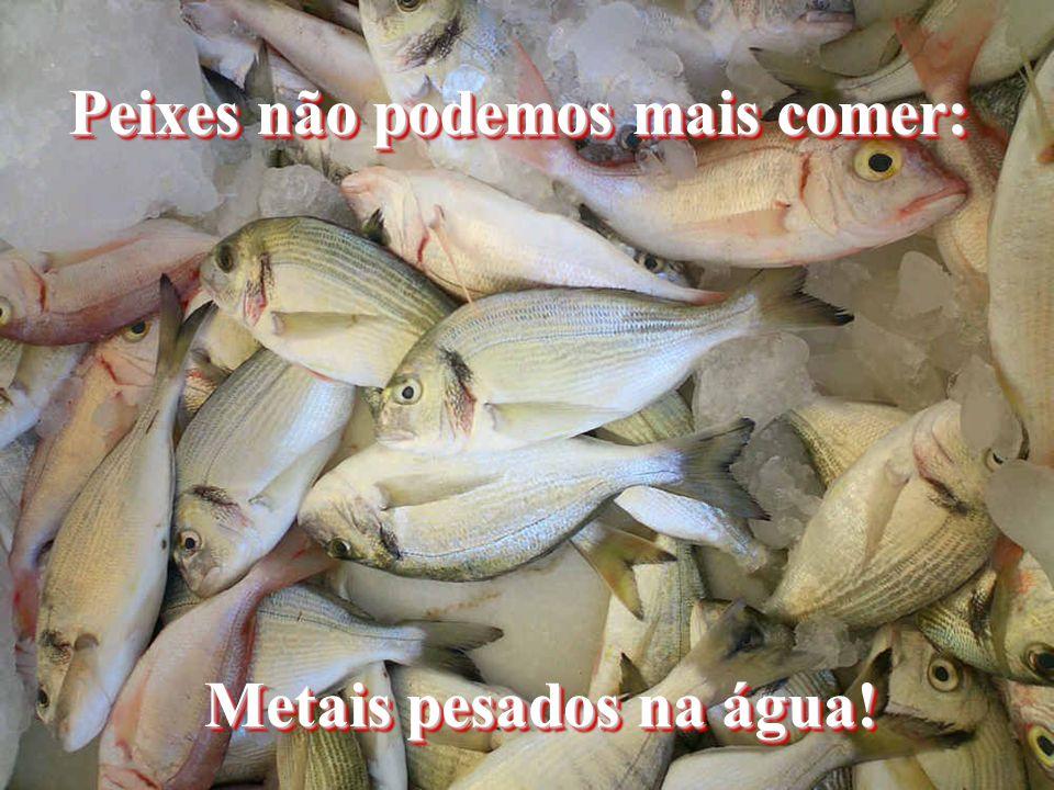 Peixes não podemos mais comer: