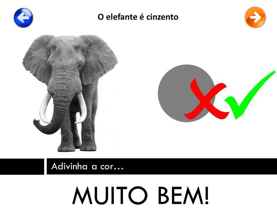 O elefante é cinzento   Adivinha a cor… MUITO BEM!