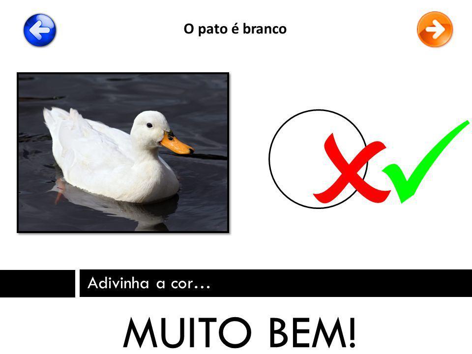 O pato é branco   Adivinha a cor… MUITO BEM!