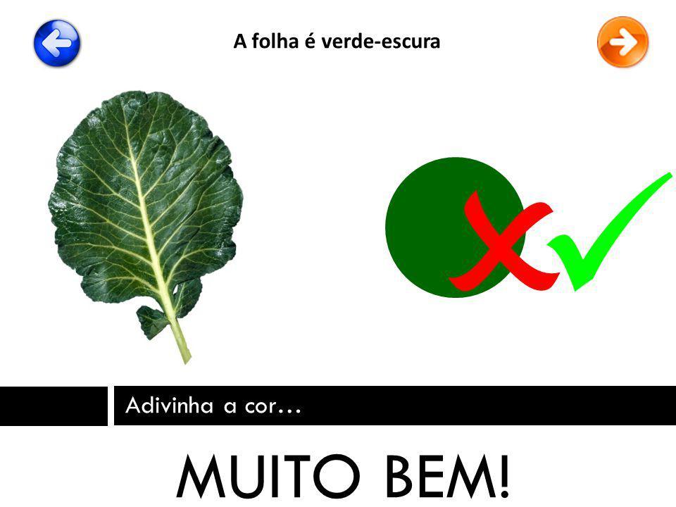 A folha é verde-escura   Adivinha a cor… MUITO BEM!