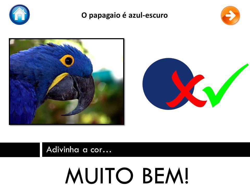 O papagaio é azul-escuro