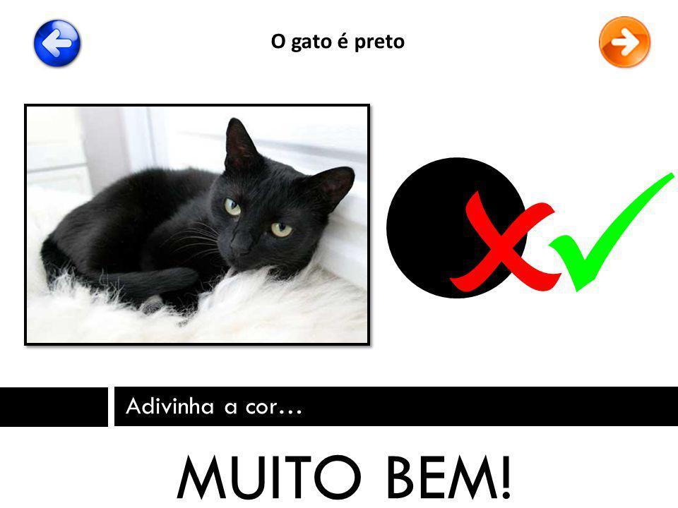 O gato é preto   Adivinha a cor… MUITO BEM!