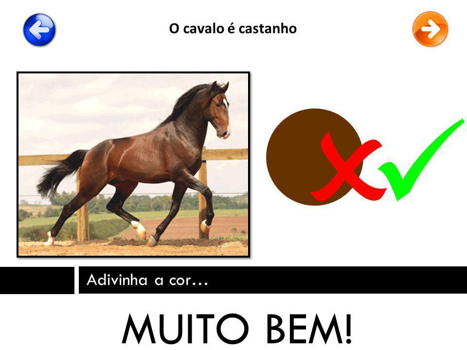 O cavalo é castanho   Adivinha a cor… MUITO BEM!