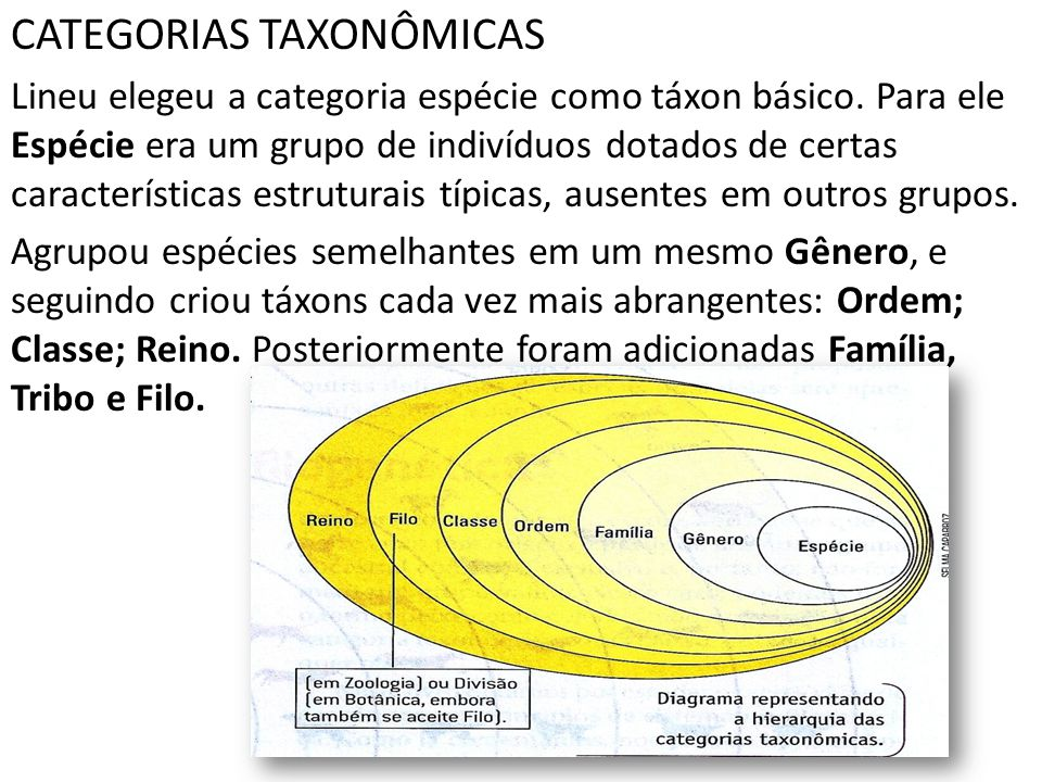 CATEGORIAS TAXONÔMICAS