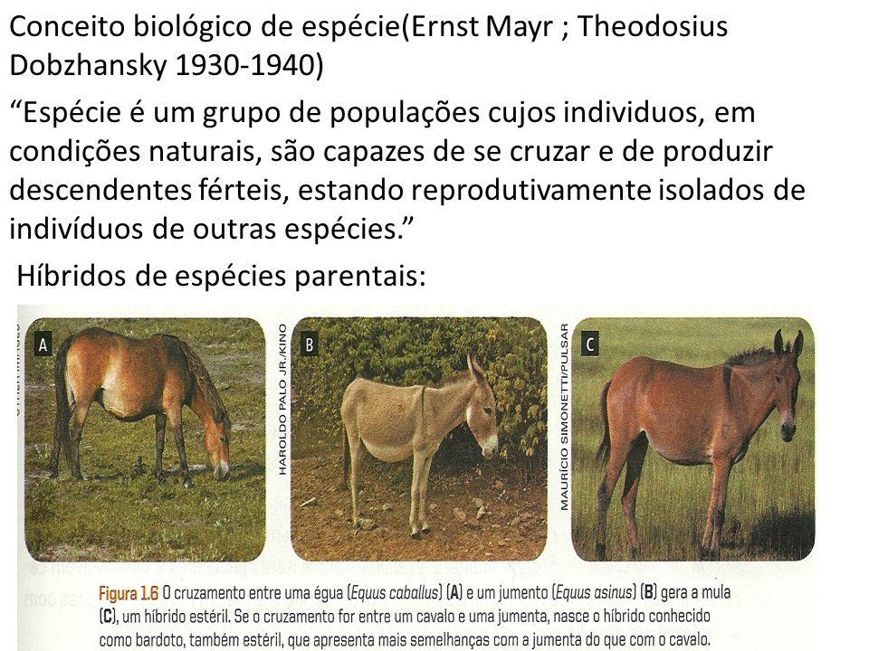 Conceito biológico de espécie(Ernst Mayr ; Theodosius Dobzhansky 1930-1940) Espécie é um grupo de populações cujos individuos, em condições naturais, são capazes de se cruzar e de produzir descendentes férteis, estando reprodutivamente isolados de indivíduos de outras espécies. Híbridos de espécies parentais:
