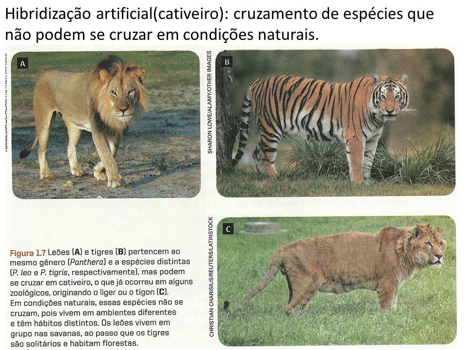 Hibridização artificial(cativeiro): cruzamento de espécies que não podem se cruzar em condições naturais.