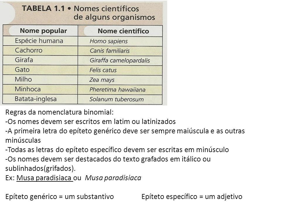 Regras da nomenclatura binomial: