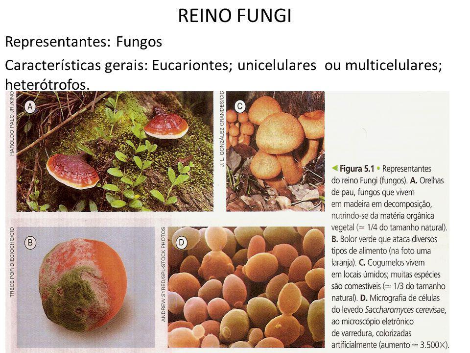 REINO FUNGI Representantes: Fungos