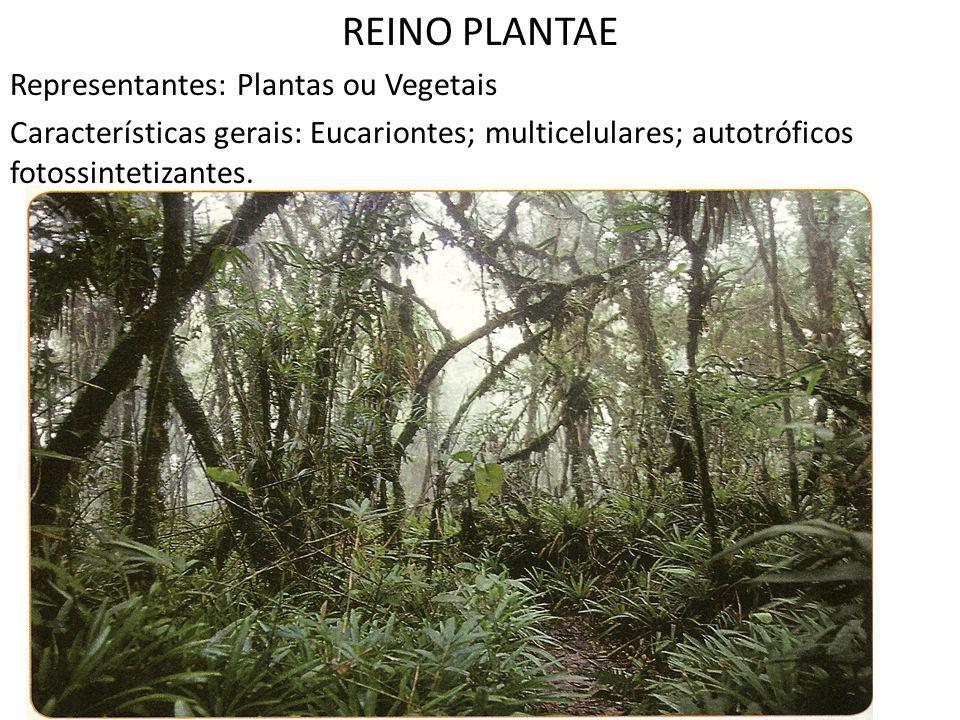 REINO PLANTAE Representantes: Plantas ou Vegetais