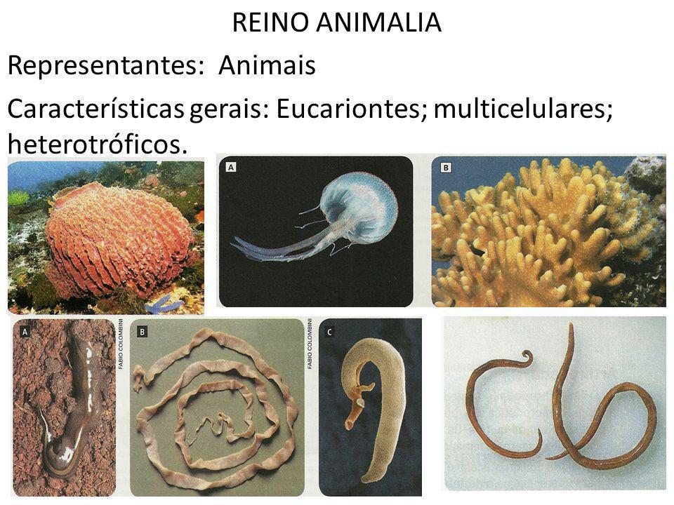 REINO ANIMALIA Representantes: Animais.