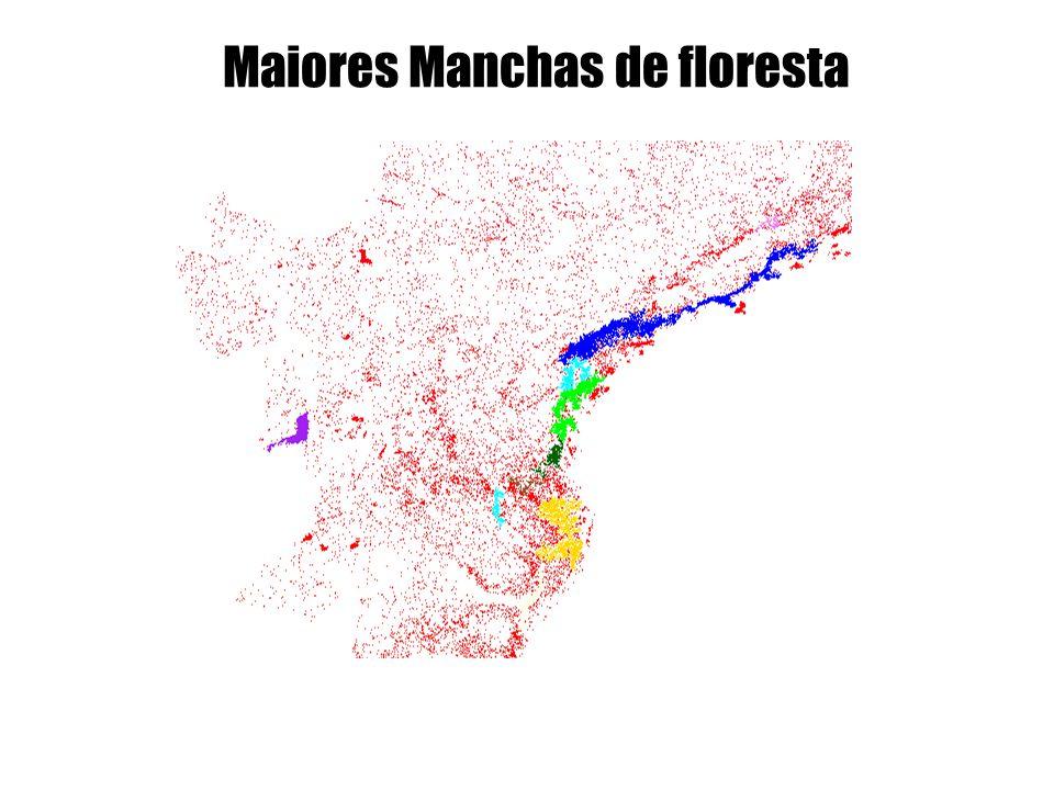 Maiores Manchas de floresta