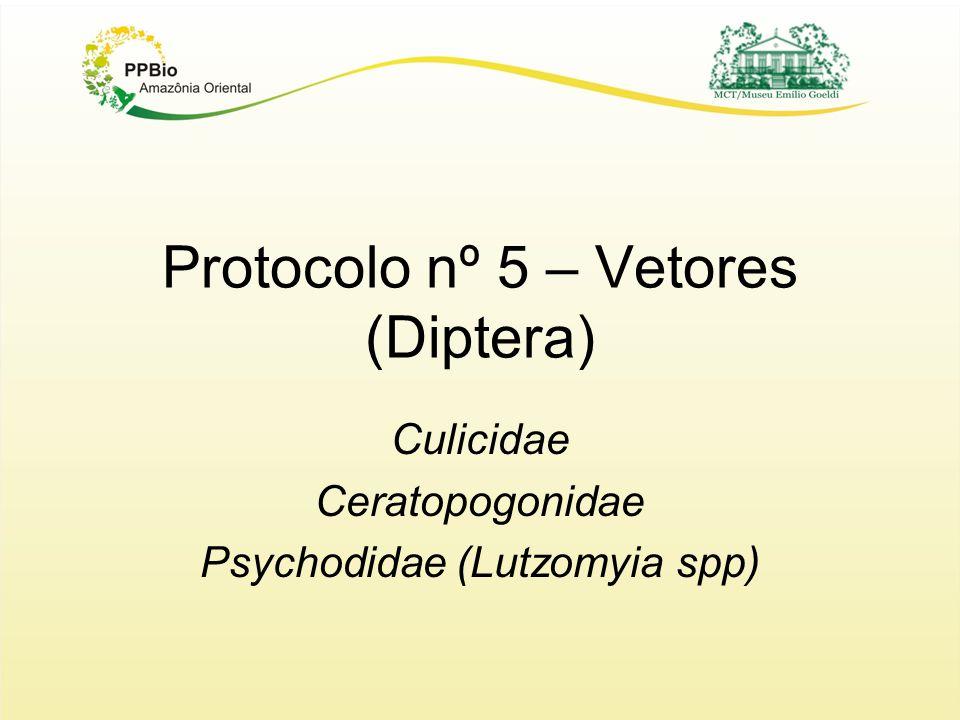 Protocolo nº 5 – Vetores (Diptera)