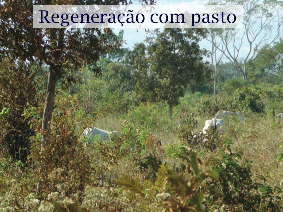 Regeneração com pasto