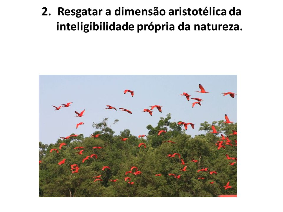 Resgatar a dimensão aristotélica da inteligibilidade própria da natureza.