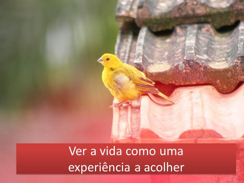 Ver a vida como uma experiência a acolher