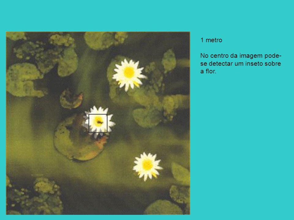 1 metro No centro da imagem pode-se detectar um inseto sobre a flor.