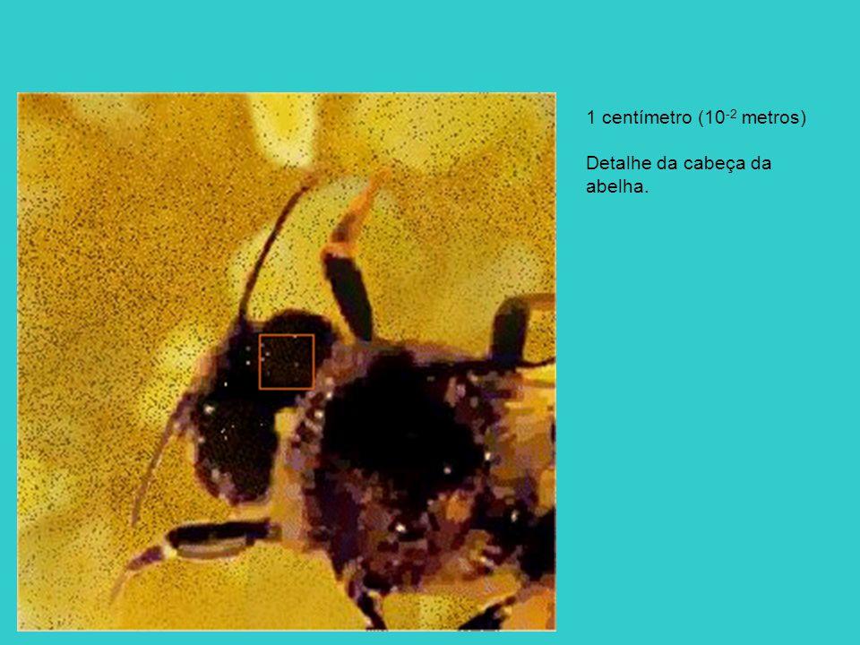 1 centímetro (10-2 metros) Detalhe da cabeça da abelha.