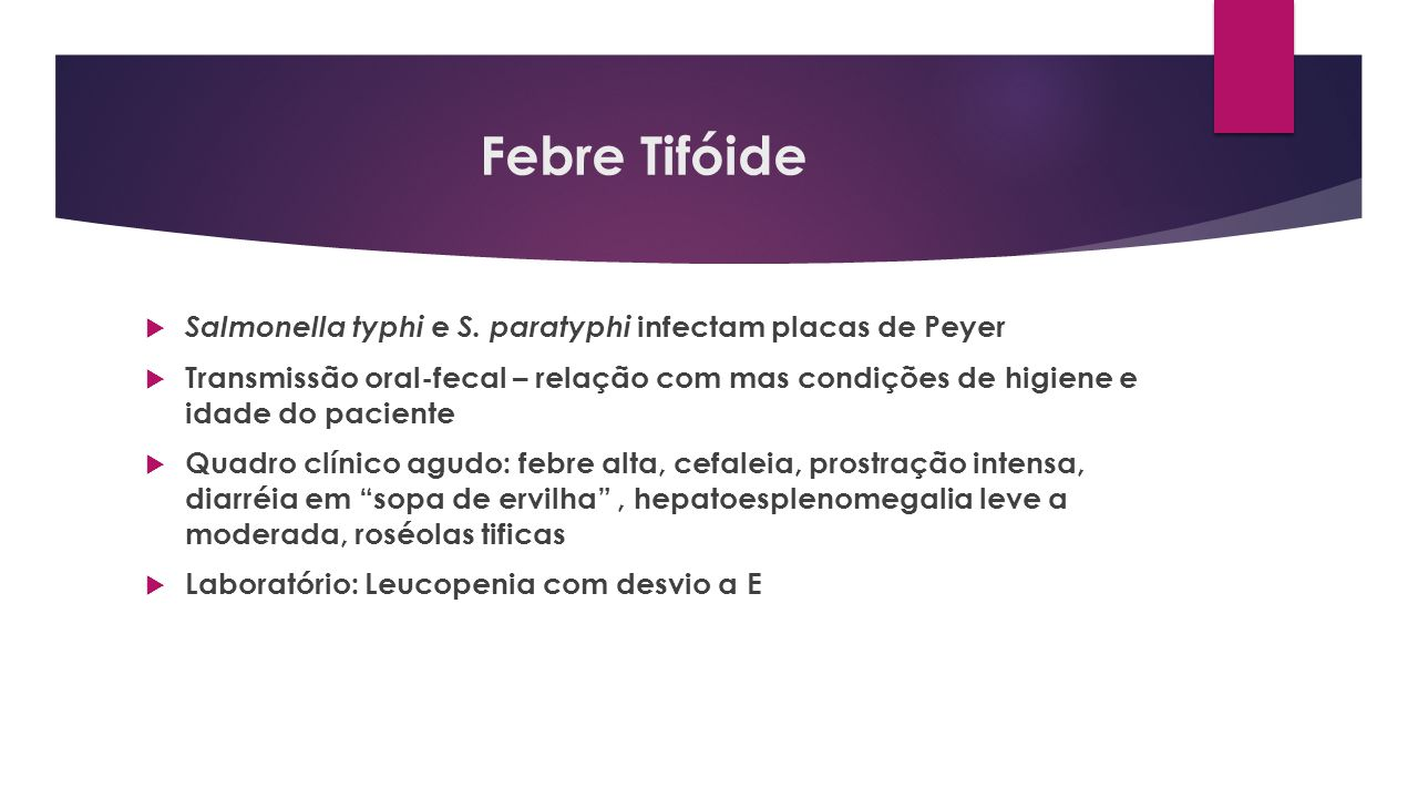 Febre Tifóide Salmonella typhi e S. paratyphi infectam placas de Peyer