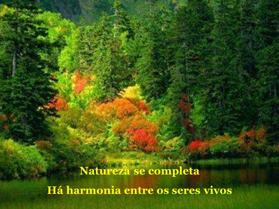 Há harmonia entre os seres vivos