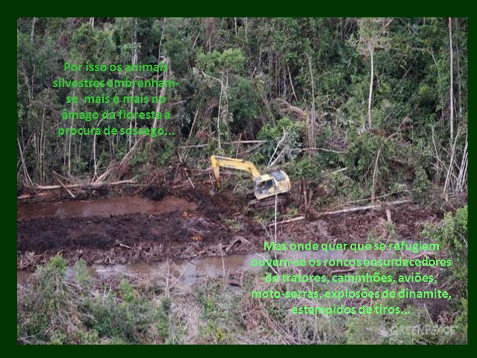 Por isso os animais silvestres embrenham-se mais e mais no âmago da floresta à procura de sossego...