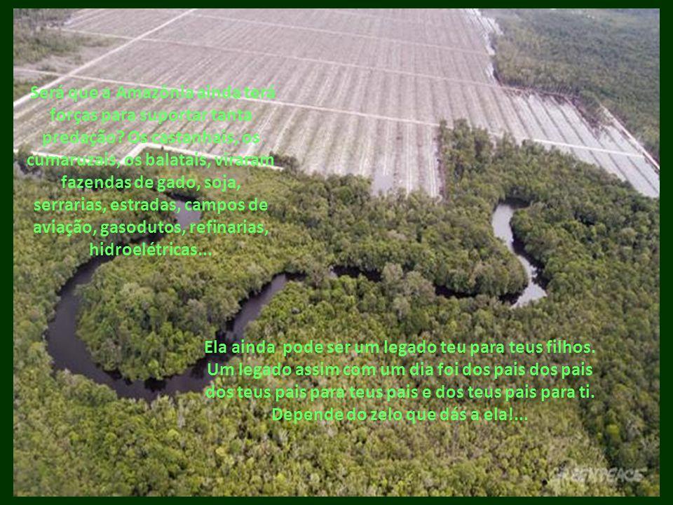 Será que a Amazônia ainda terá forças para suportar tanta predação