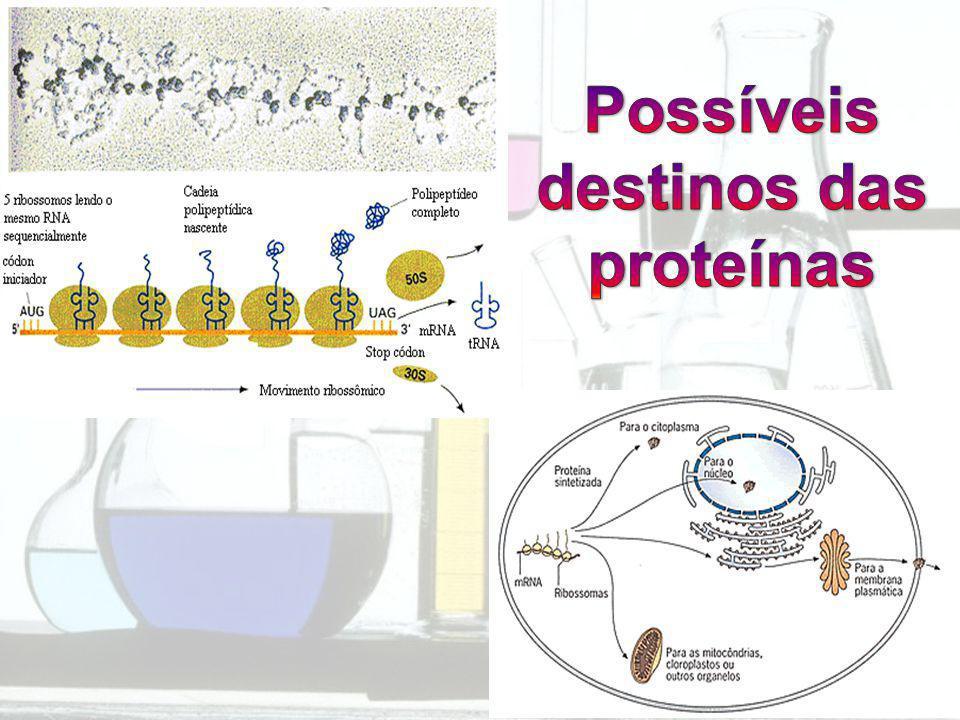 Possíveis destinos das proteínas