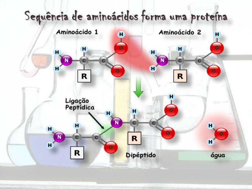 Sequência de aminoácidos forma uma proteína