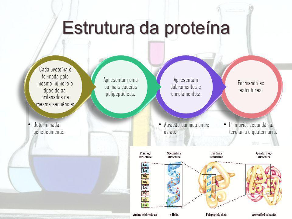 Estrutura da proteína Formando as estruturas: