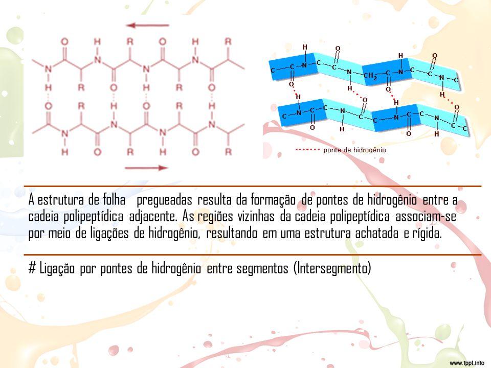 A estrutura de folha pregueadas resulta da formação de pontes de hidrogênio entre a cadeia polipeptídica adjacente. As regiões vizinhas da cadeia polipeptídica associam-se por meio de ligações de hidrogênio, resultando em uma estrutura achatada e rígida.