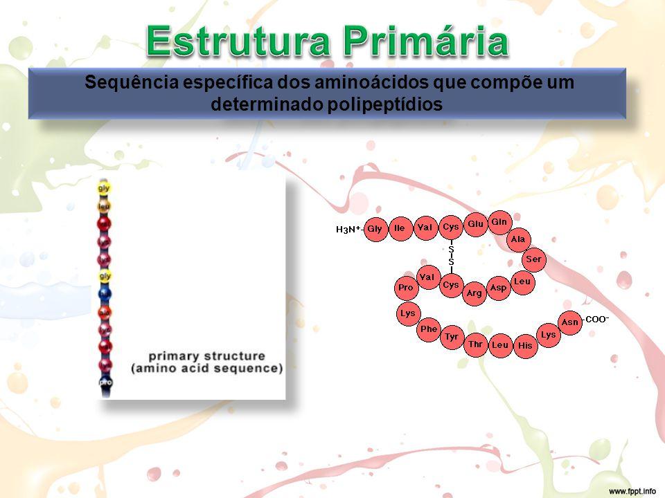 Estrutura Primária Sequência específica dos aminoácidos que compõe um determinado polipeptídios