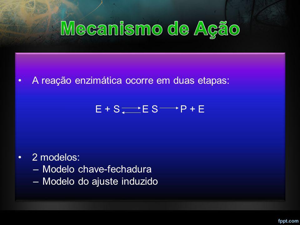 Mecanismo de Ação A reação enzimática ocorre em duas etapas: