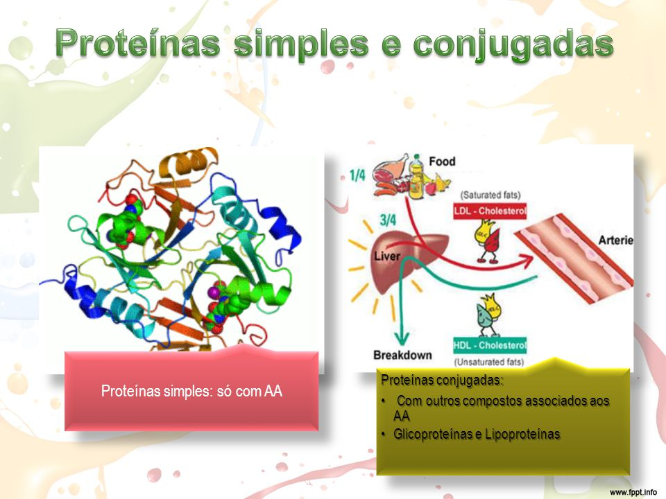 Proteínas simples e conjugadas
